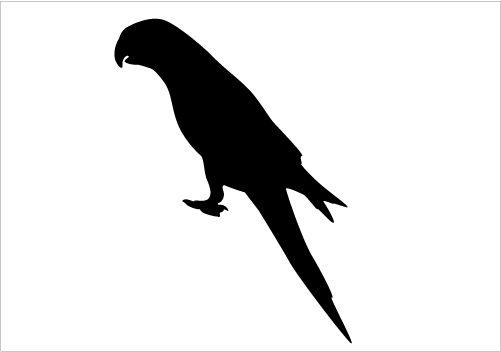 parrot silhouette free parrot silhouette vector download free vectors parrot silhouette
