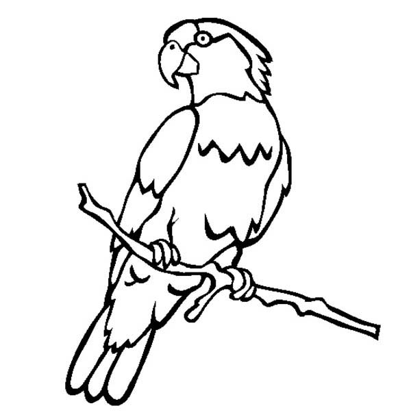 picture of parrot for colouring amazon parrot coloring download amazon parrot coloring parrot colouring for picture of
