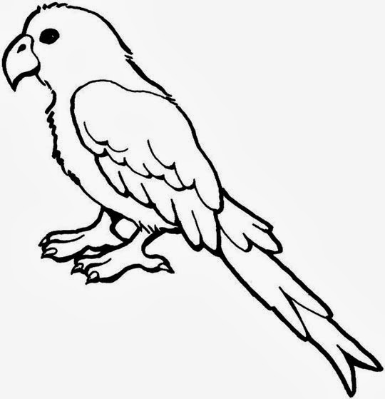 picture of parrot for colouring animal coloring pages for kids animal coloring pages for of colouring picture parrot