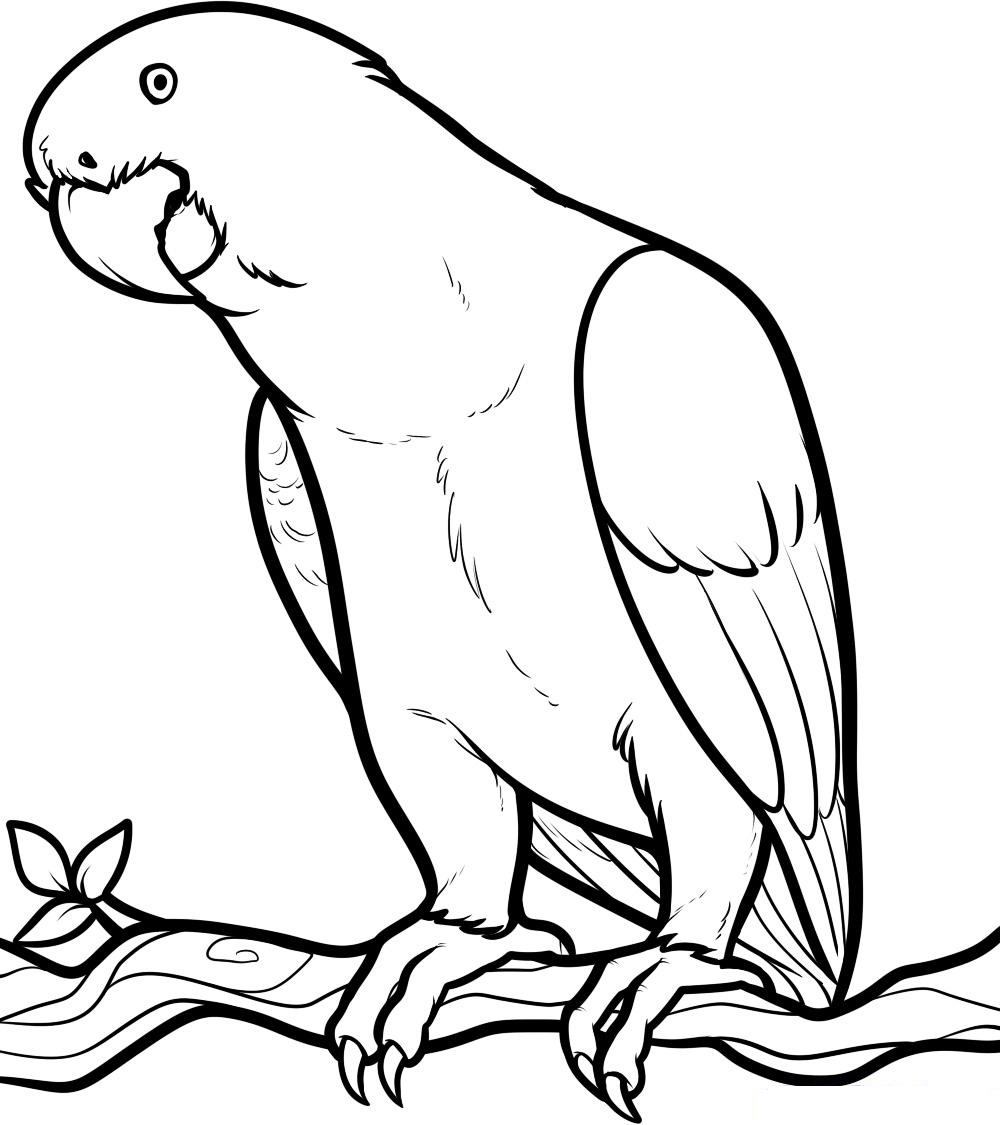 picture of parrot for colouring kindergarten worksheet guide pictures clip art line parrot picture of colouring for