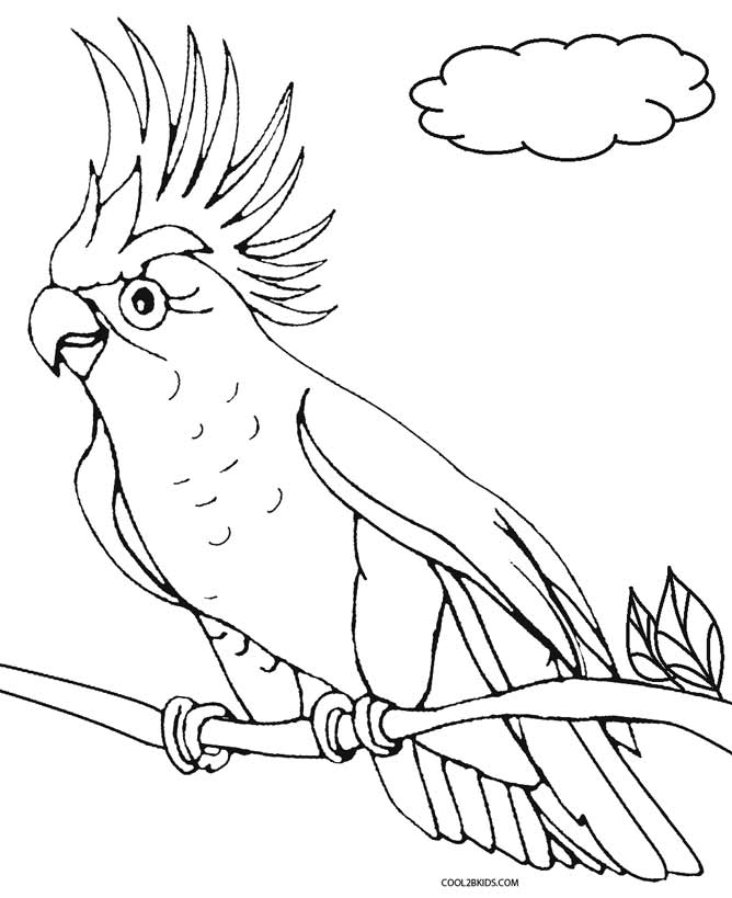 picture of parrot for colouring parrot coloring pages getcoloringpagescom parrot colouring of picture for