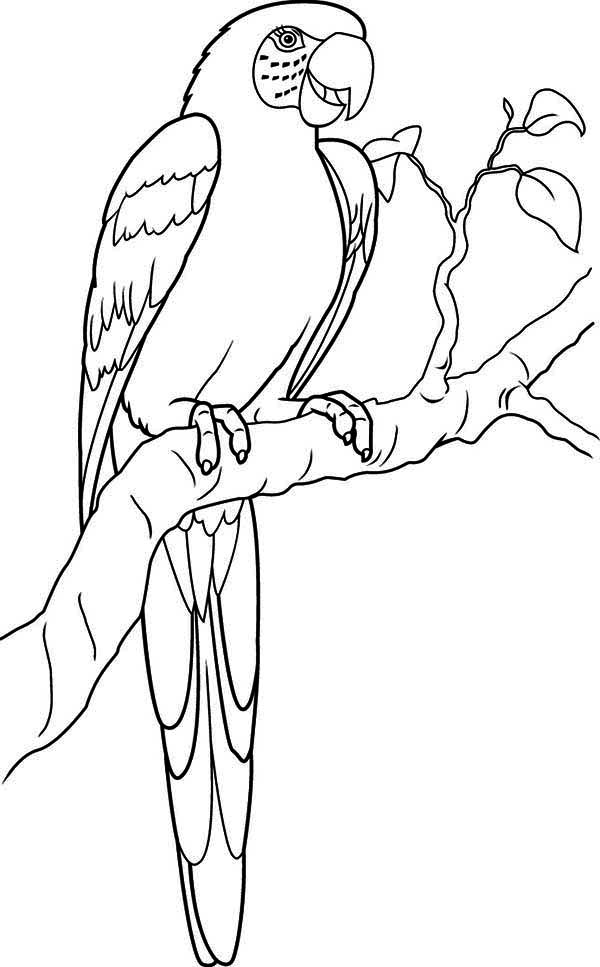 picture of parrot for colouring parrotprintablecoloringpages back print this parrot colouring picture of for parrot