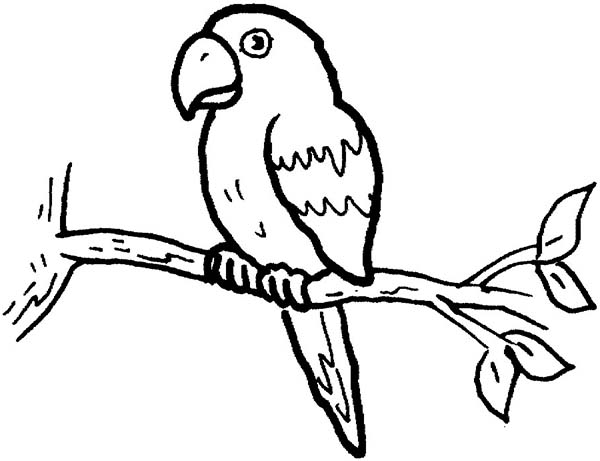 picture of parrot for colouring smiley parrot coloring page for kids colouring parrot of for picture