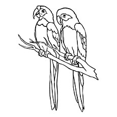 picture of parrot for colouring sweet parrot coloring page wecoloringpagecom for picture of parrot colouring