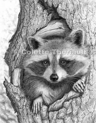 raccoon drawing artful pencil drawings by petanimal artist colette theriault drawing raccoon