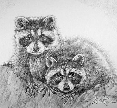 raccoon drawing beautiful raccoon drawings fine art america drawing raccoon