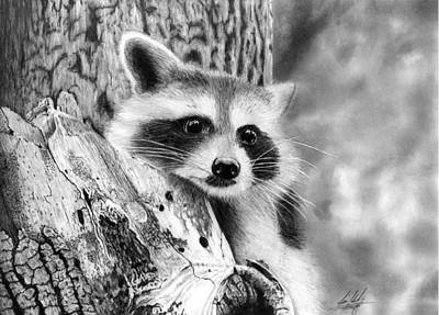 raccoon drawing beautiful raccoon drawings fine art america raccoon drawing
