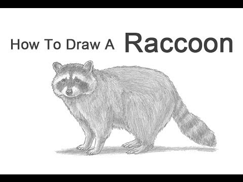 raccoon drawing gary tymon39s blog pencil drawings oil and acrylic drawing raccoon