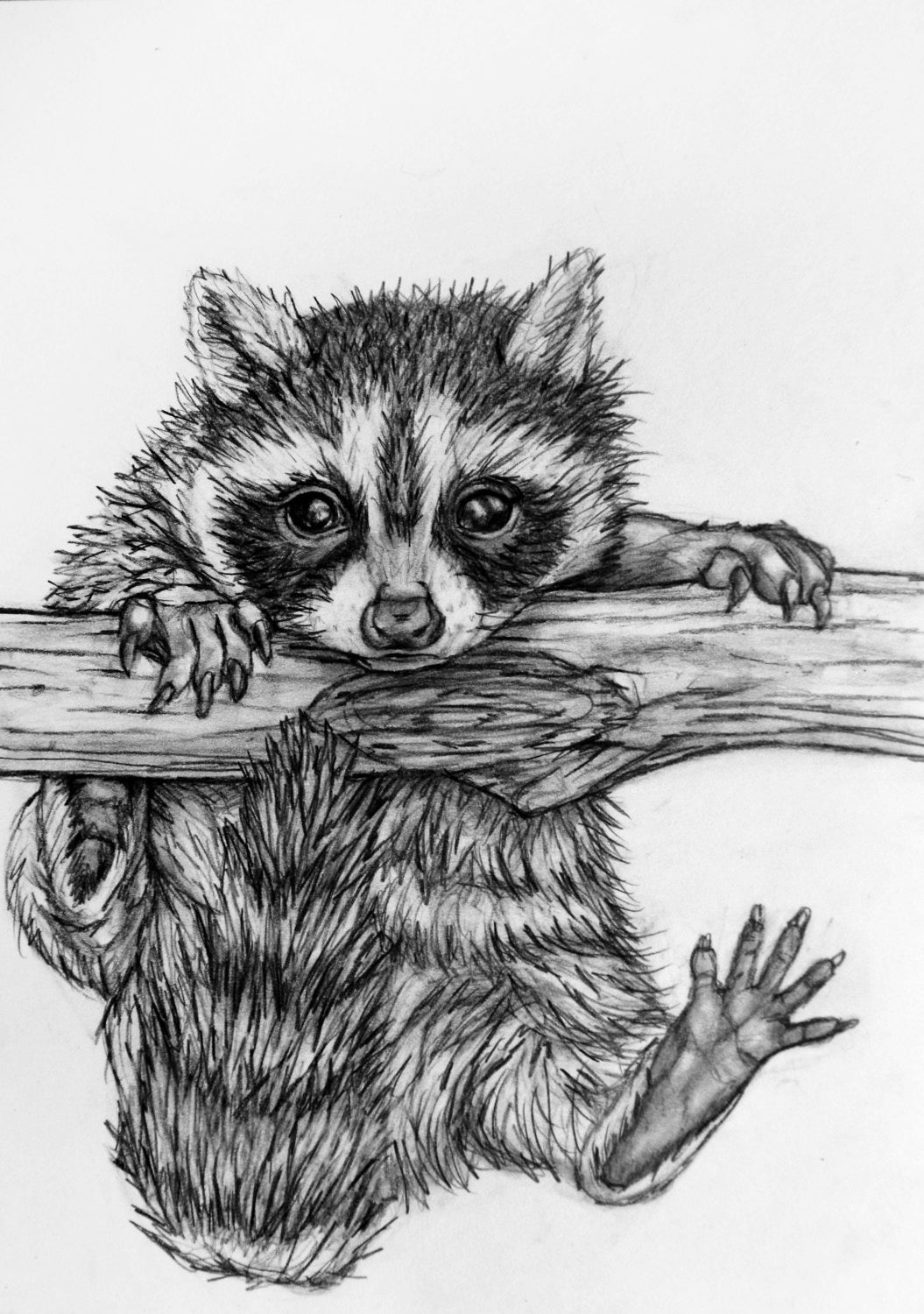 raccoon drawing how to draw a raccoon youtube raccoon drawing