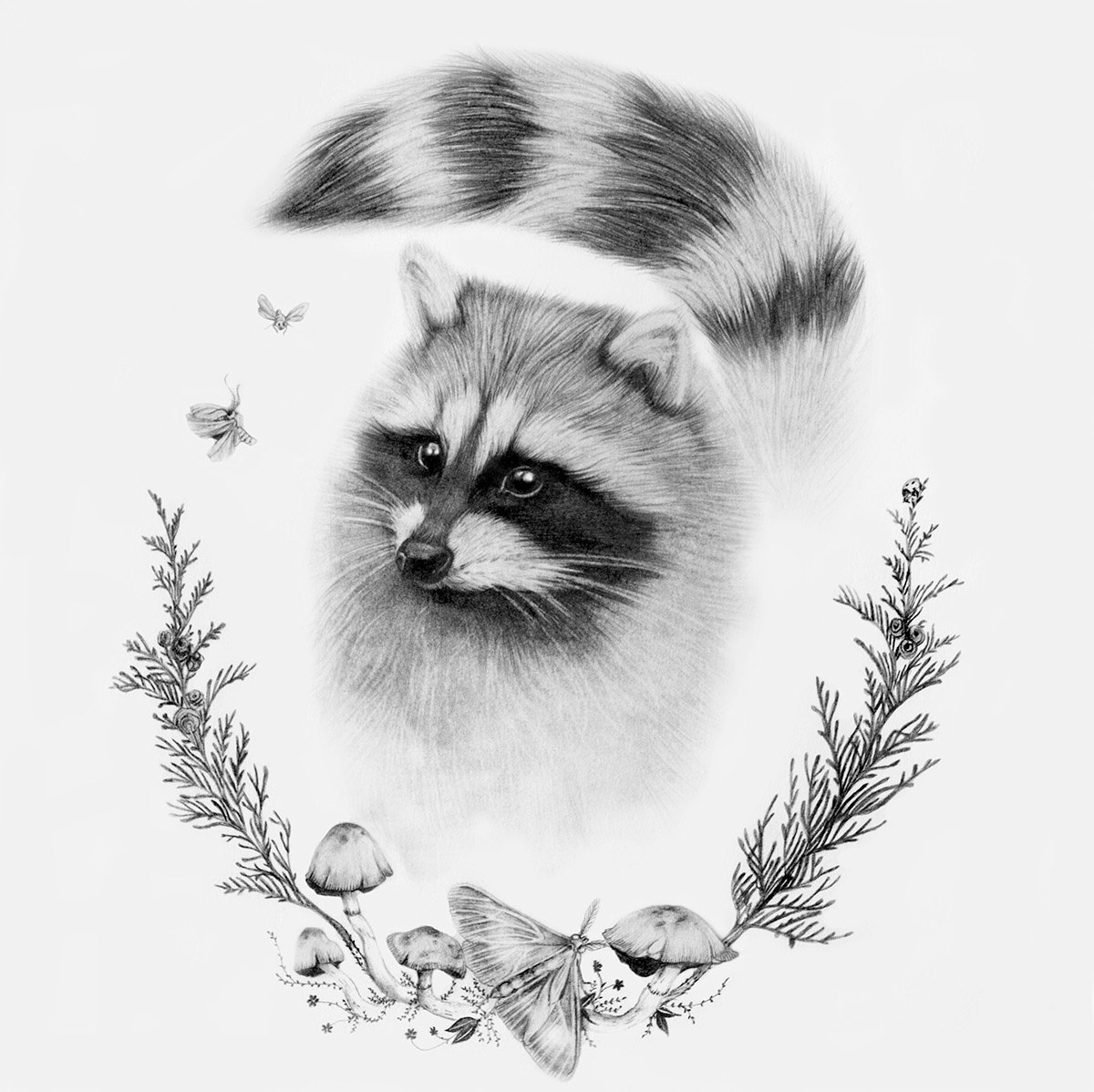raccoon drawing raccoon costume cute delicious raccoon drawing