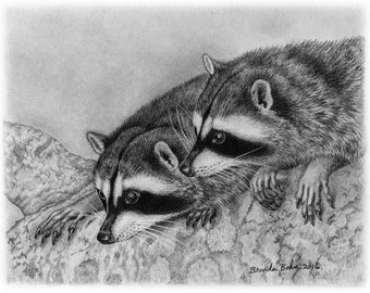 raccoon drawing raccoon drawing etsy drawing raccoon