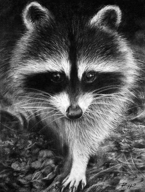 raccoon drawing racoon study original raccoon art animal drawings by drawing raccoon