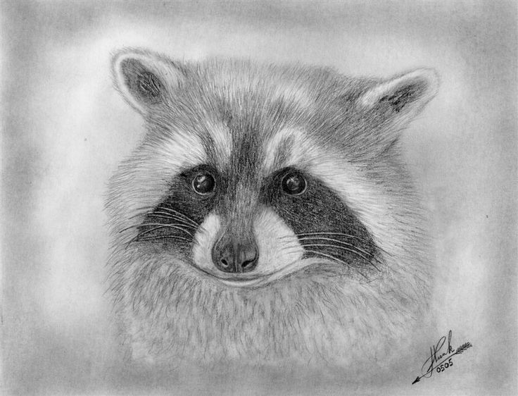 raccoon drawing rocket raccoon digital drawing by biigm on deviantart drawing raccoon