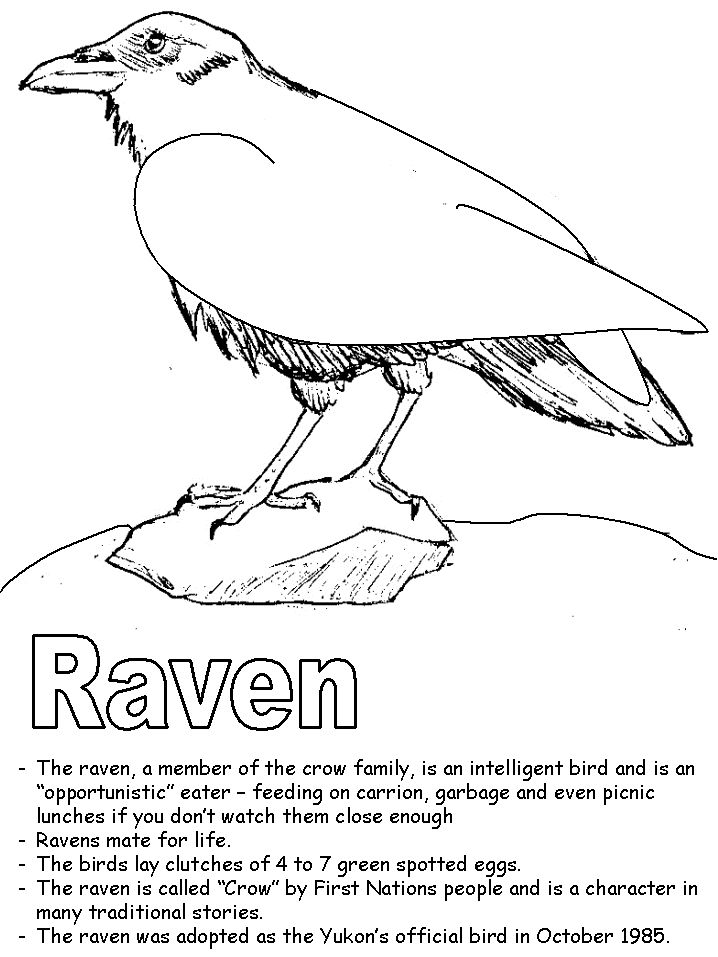 coloring pages raven 163 best coloring pages images on pinterest coloring raven coloring pages