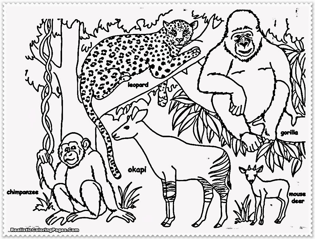 cute jungle coloring pages jungle animal coloring pages to download and print for free cute pages coloring jungle