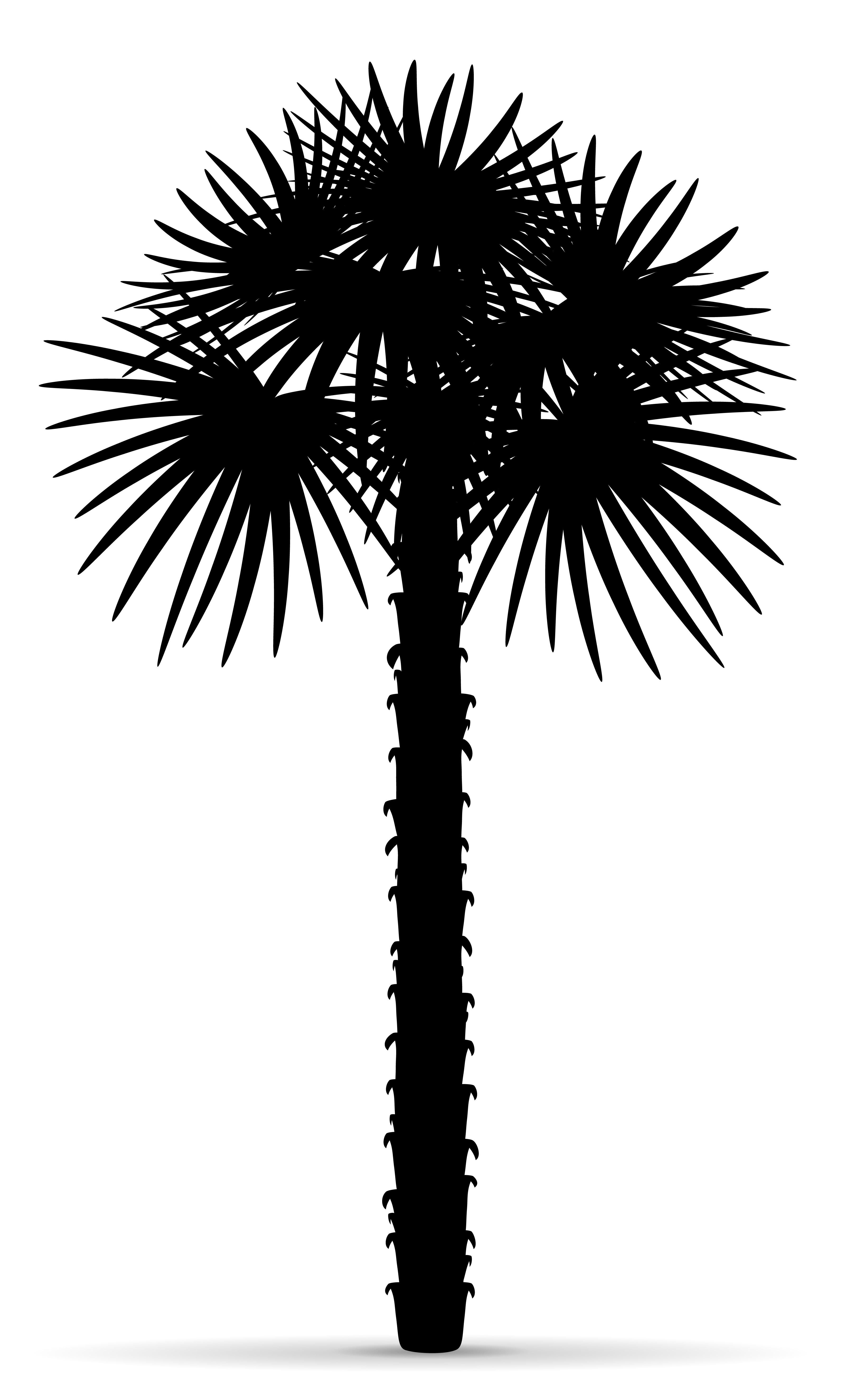 palm tree outline fresh tree outline images jpg black wallpaper outline tree palm