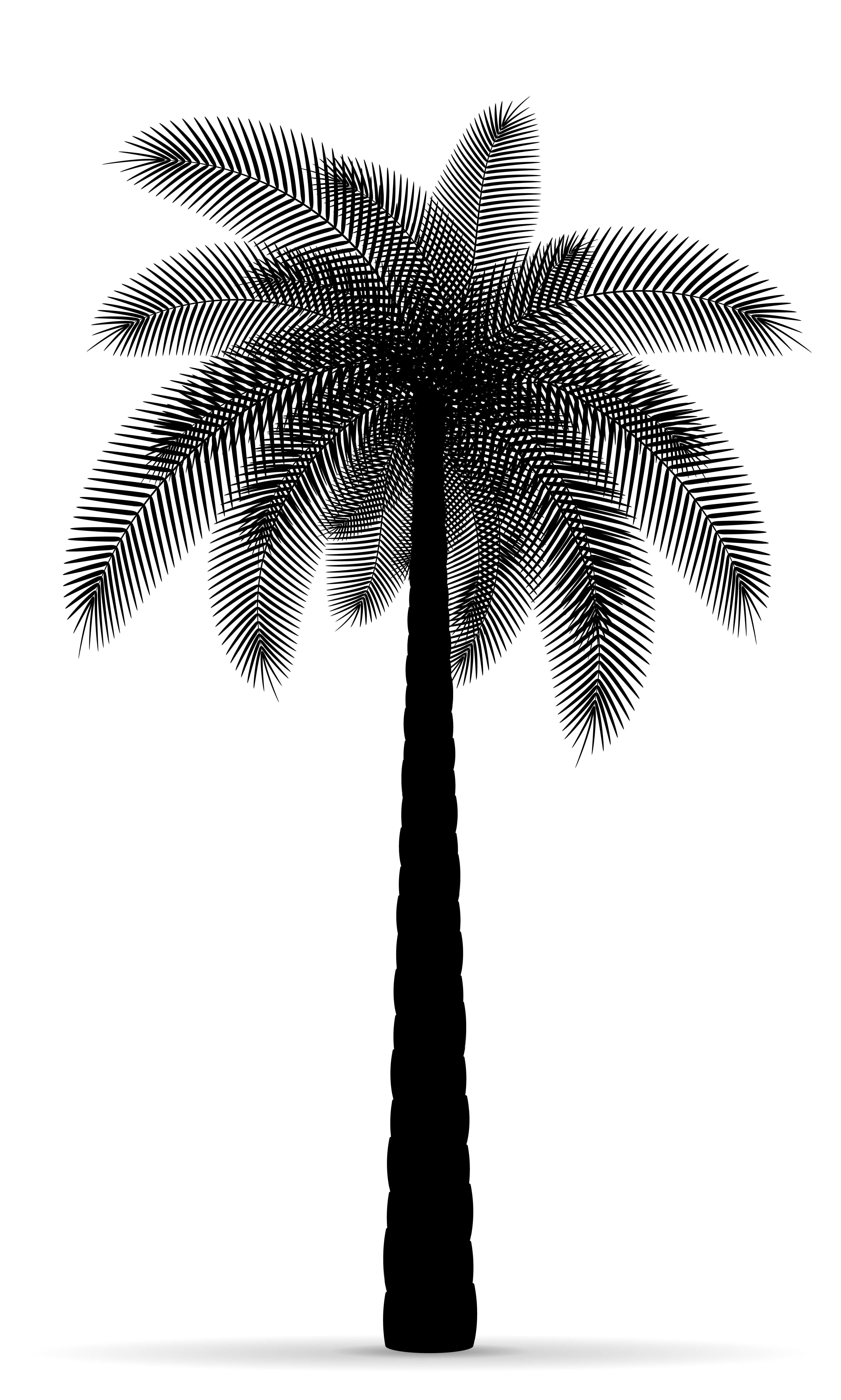 palm tree outline palm tree black outline silhouette stock vector palm tree outline