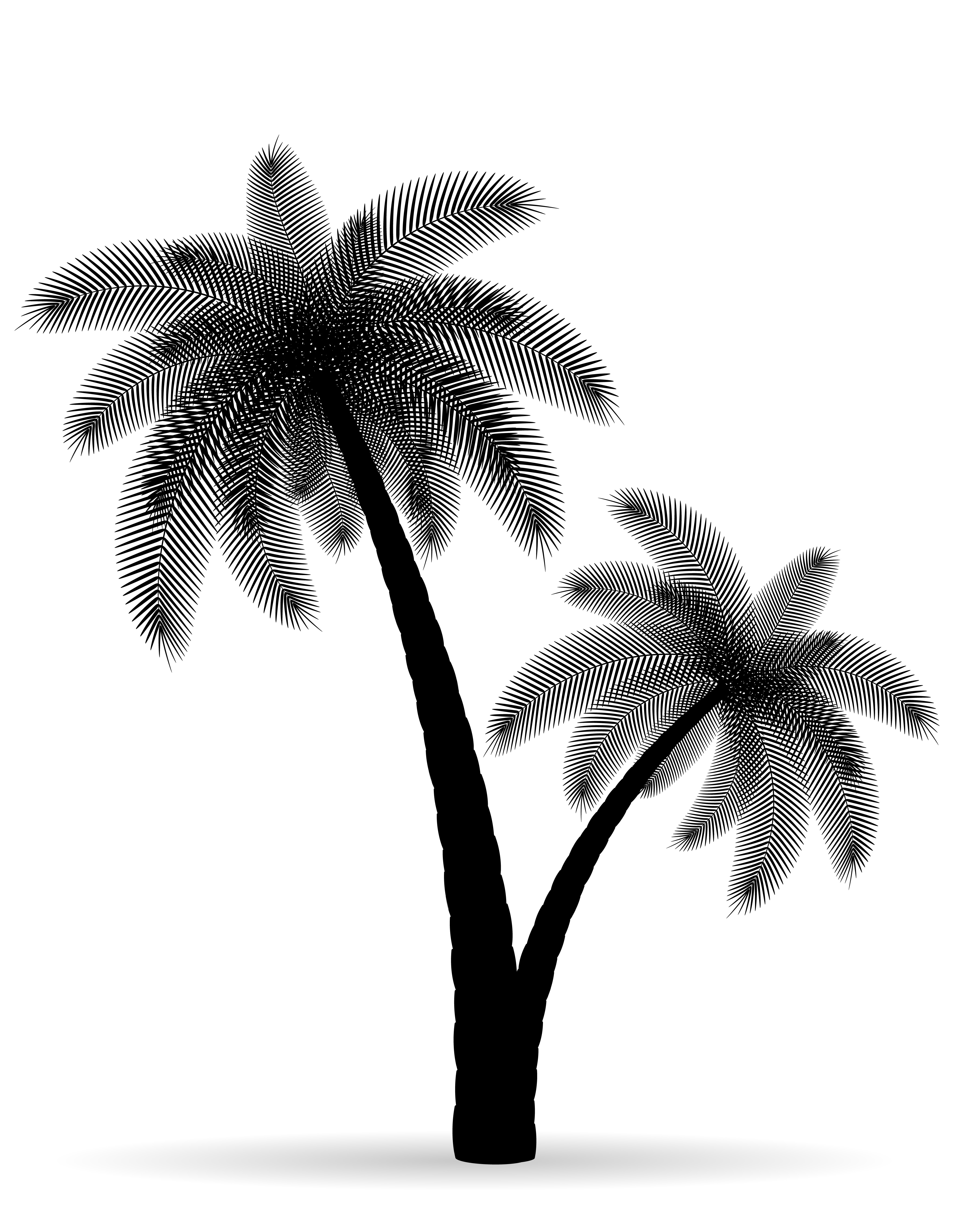 palm tree outline palm tree drawing outline at paintingvalleycom explore outline palm tree