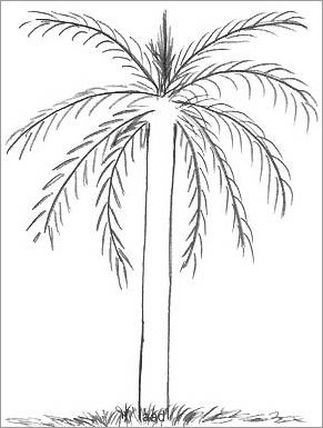 palm tree outline palm tree outline clipart best tree palm outline