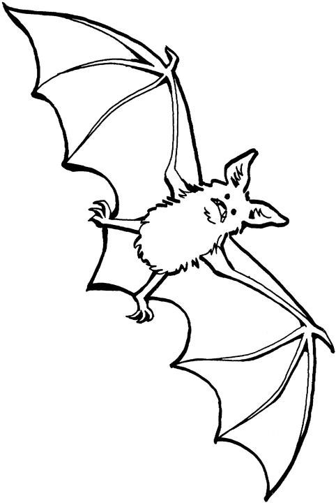 stellaluna coloring pages love to teach stellaluna activities teacher student coloring pages stellaluna