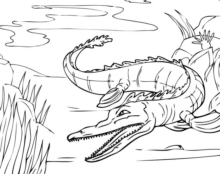 a for alligator coloring page free printable alligator coloring pages for kids cool2bkids coloring a page for alligator