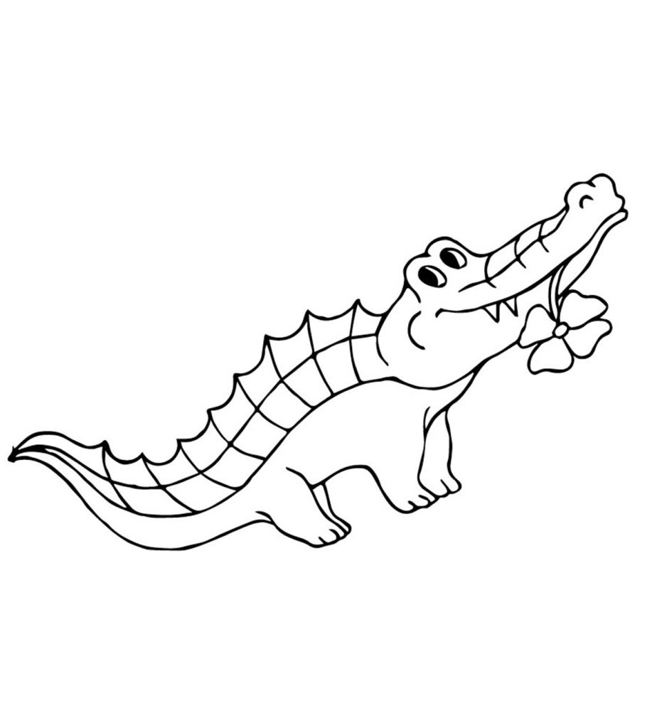 a for alligator coloring page free printable alligator coloring pages for kids sketch for a alligator coloring page