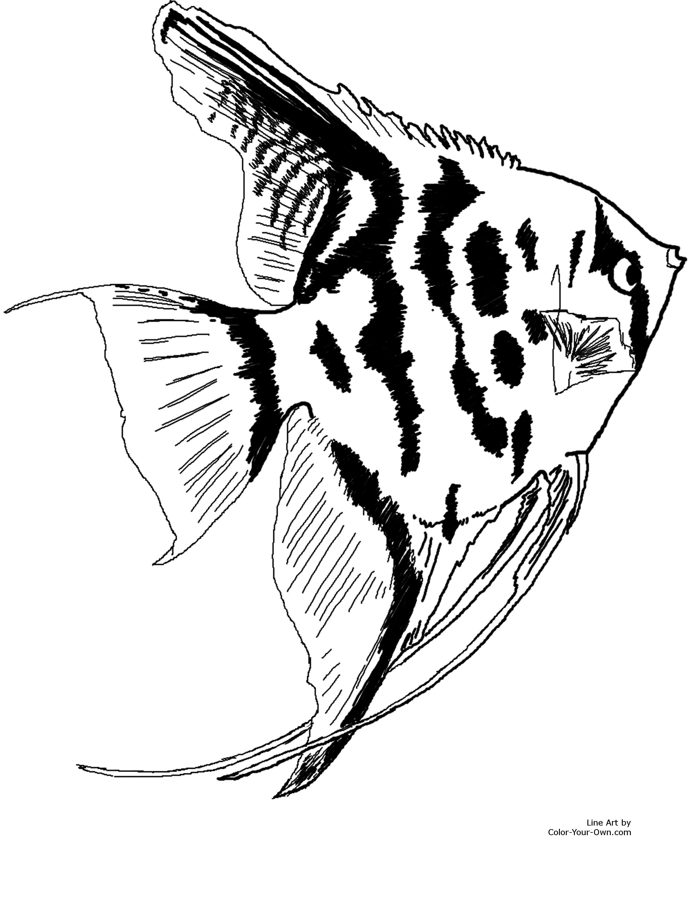 angelfish drawing 20 inspiration angelfish drawing images armelle jewellery angelfish drawing