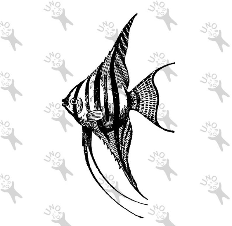 angelfish drawing angelfish drawing detailed angelfish pen sketch sea angelfish drawing