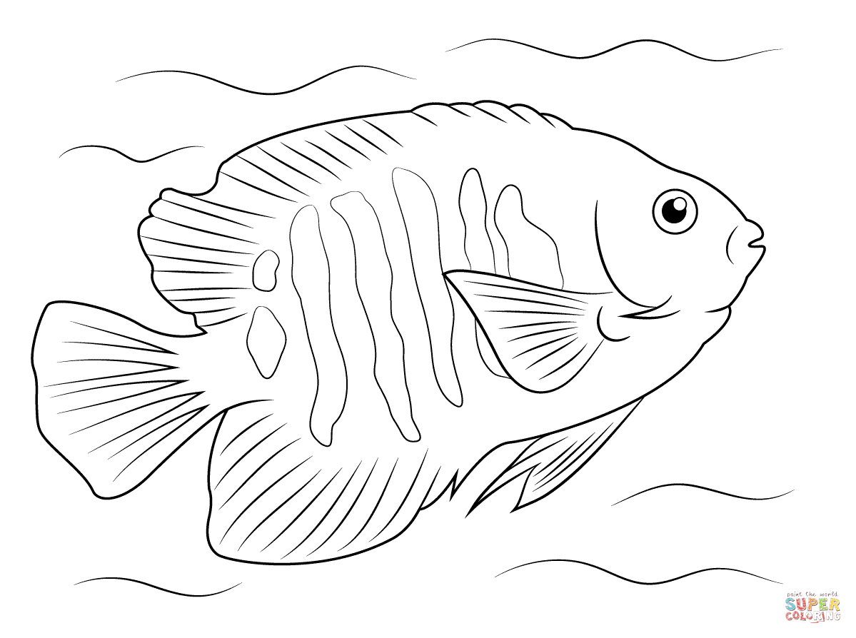 angelfish drawing angelfish drawing free download on clipartmag angelfish drawing