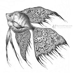 angelfish drawing angelfish sketch drawing angelfish
