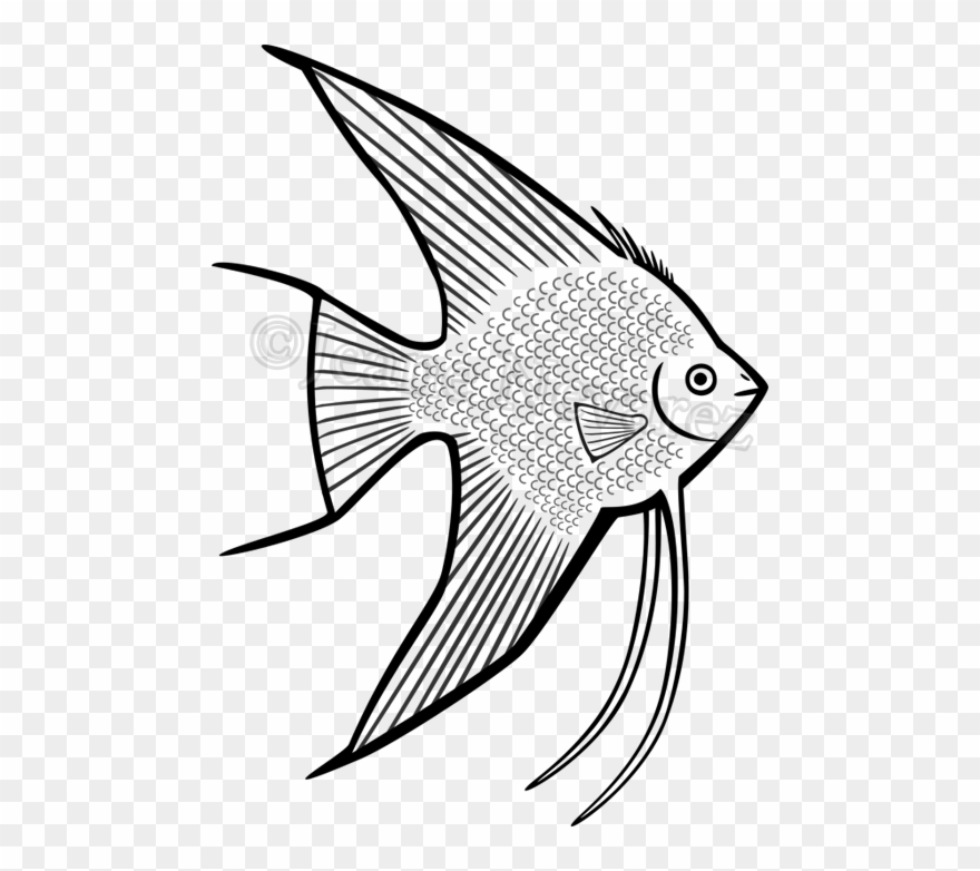 angelfish drawing best angelfish illustrations royalty free vector graphics angelfish drawing
