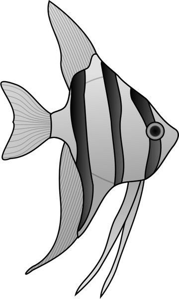 angelfish drawing emperor angelfish illustrations royalty free vector angelfish drawing
