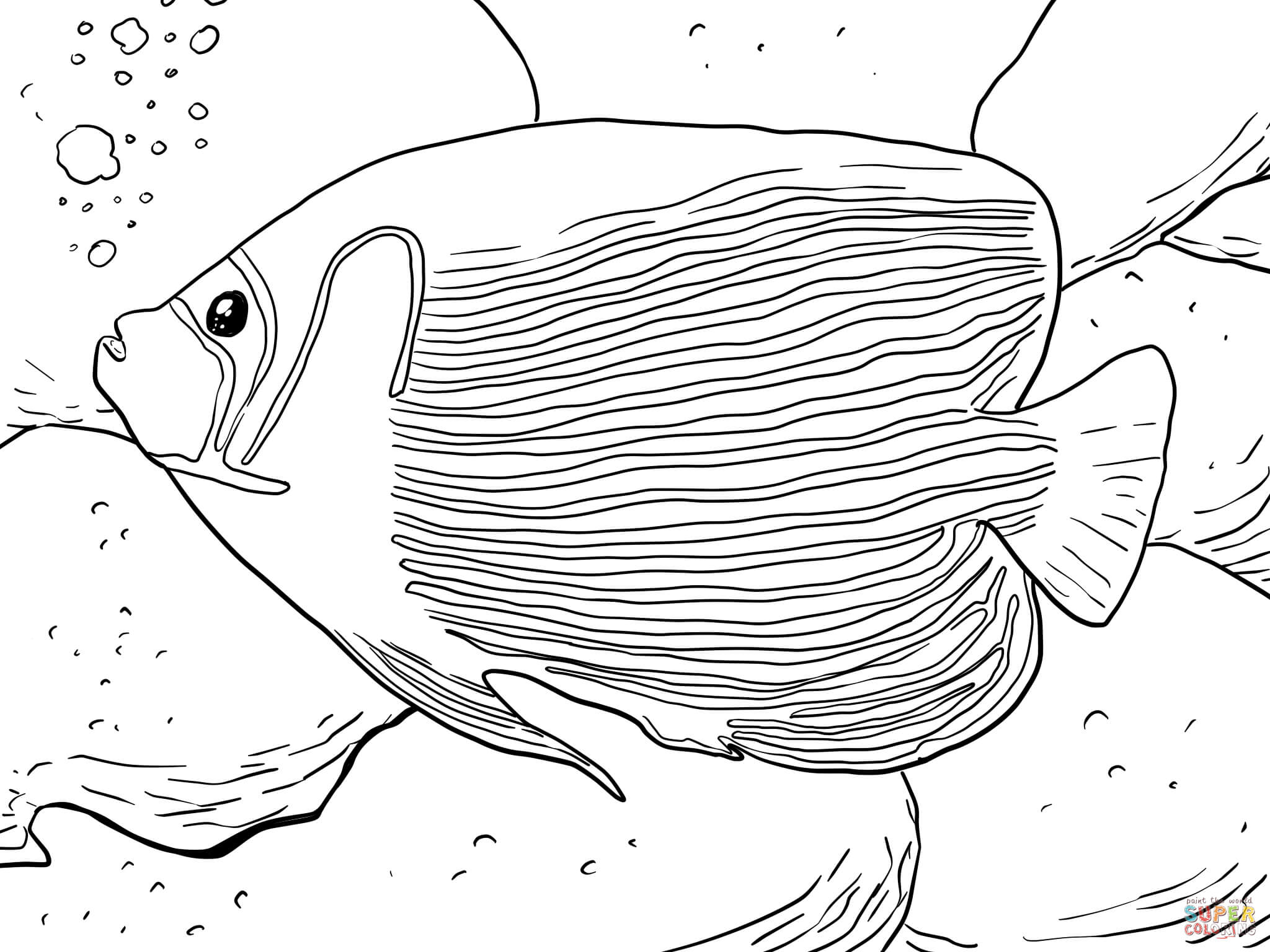 angelfish drawing fish coloring page drawing angelfish