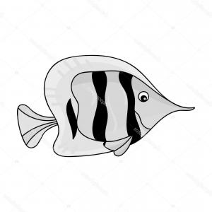 angelfish drawing fish for drawing at getdrawings free download drawing angelfish