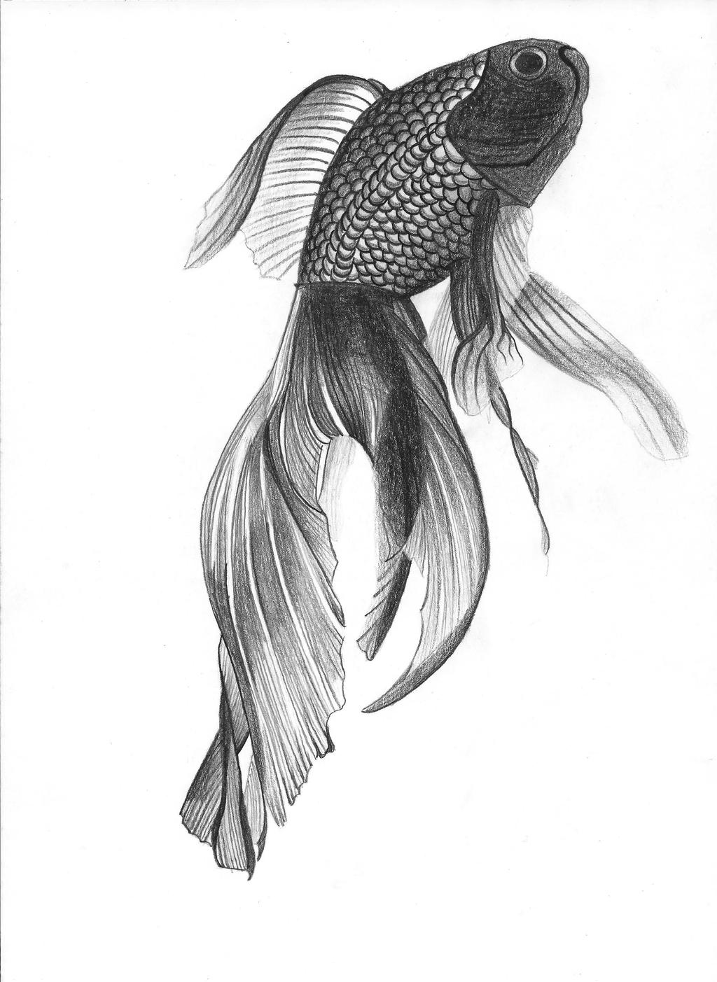 Angelfish drawing