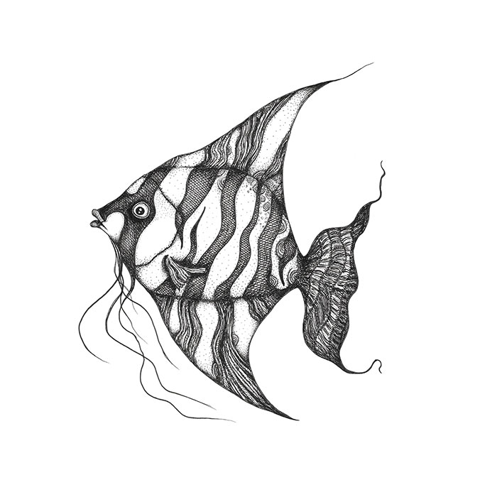 angelfish drawing walleye vector barramundi fish angelfish drawing clipart drawing angelfish