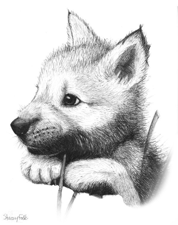anime animals drawings how to draw anime dogs step by step anime animals anime anime drawings animals