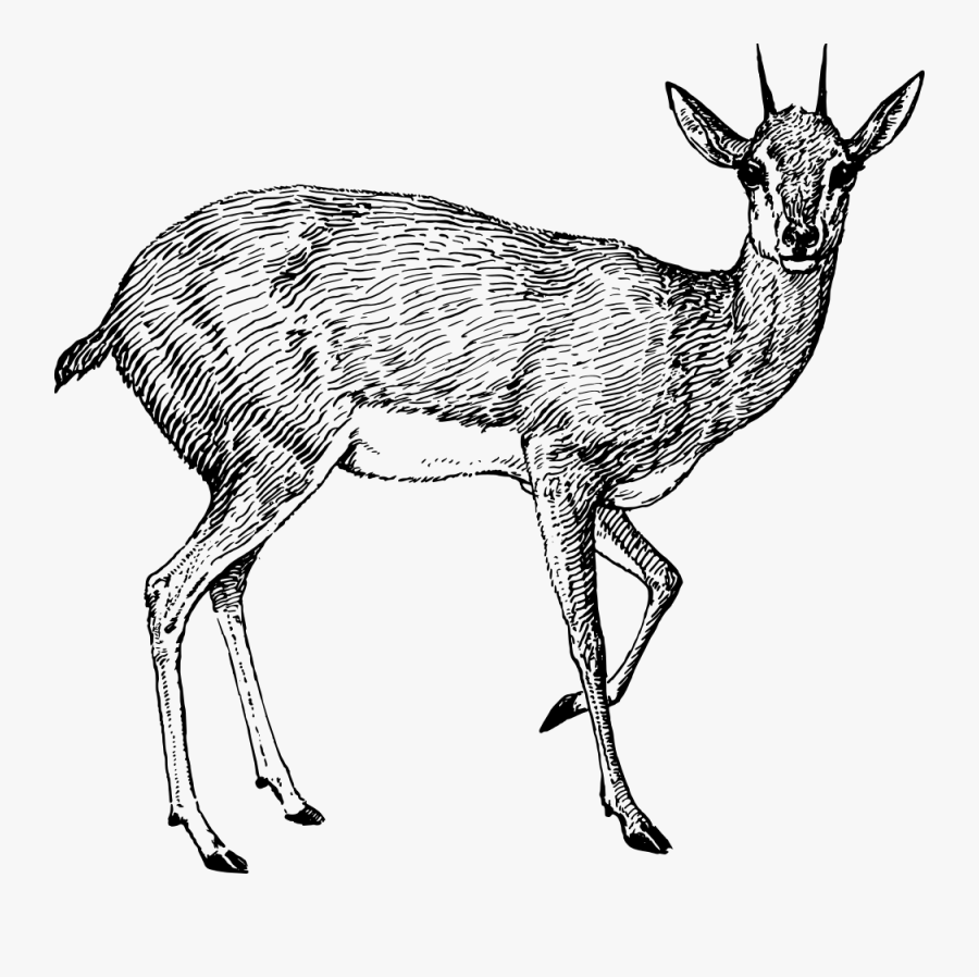 antelope drawing quotantelope sketchesquot by rodney55 redbubble antelope drawing