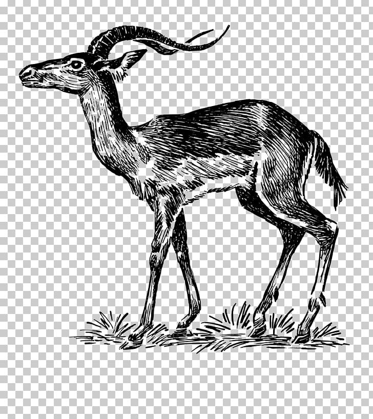 antelope drawing wild and domestic animals arcmelcom drawing antelope