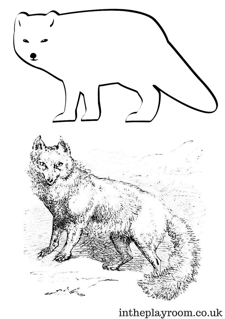 arctic animal coloring pages arctic animals song for children arctic pages animal coloring