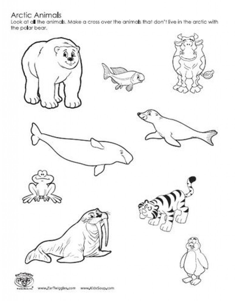 arctic animal coloring pages free printable arctic animals coloring pages coloring home animal arctic pages coloring
