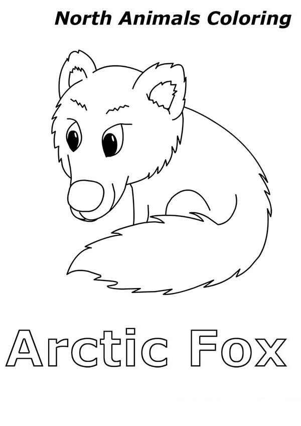 arctic animal coloring pages free printable arctic animals coloring pages coloring home animal coloring arctic pages