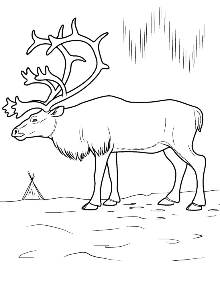 arctic animal coloring pages polar arctic animals coloring pages Állatok rajz pages coloring arctic animal