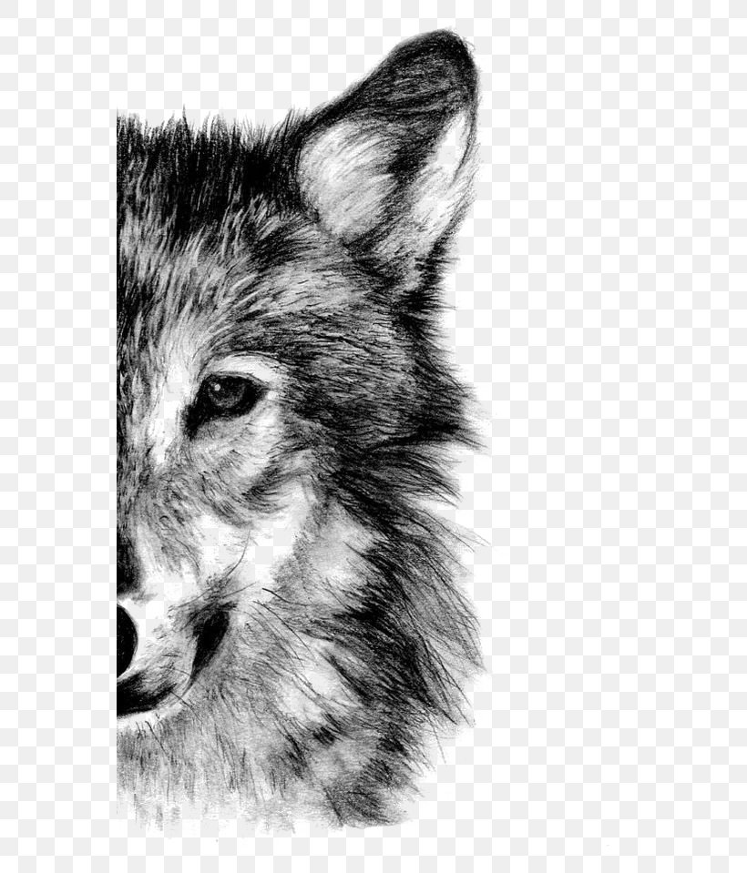 arctic wolf drawing arctic wolf clipart transparent background animal jam arctic wolf drawing