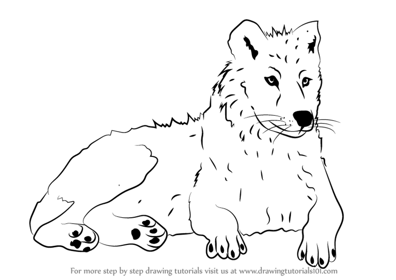 arctic wolf drawing arctic wolf drawing by sharlena wood wolf drawing arctic