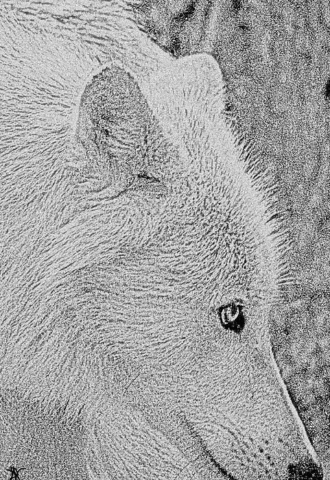 arctic wolf drawing drawing black wolf arctic wolf png clipart art artwork arctic wolf drawing