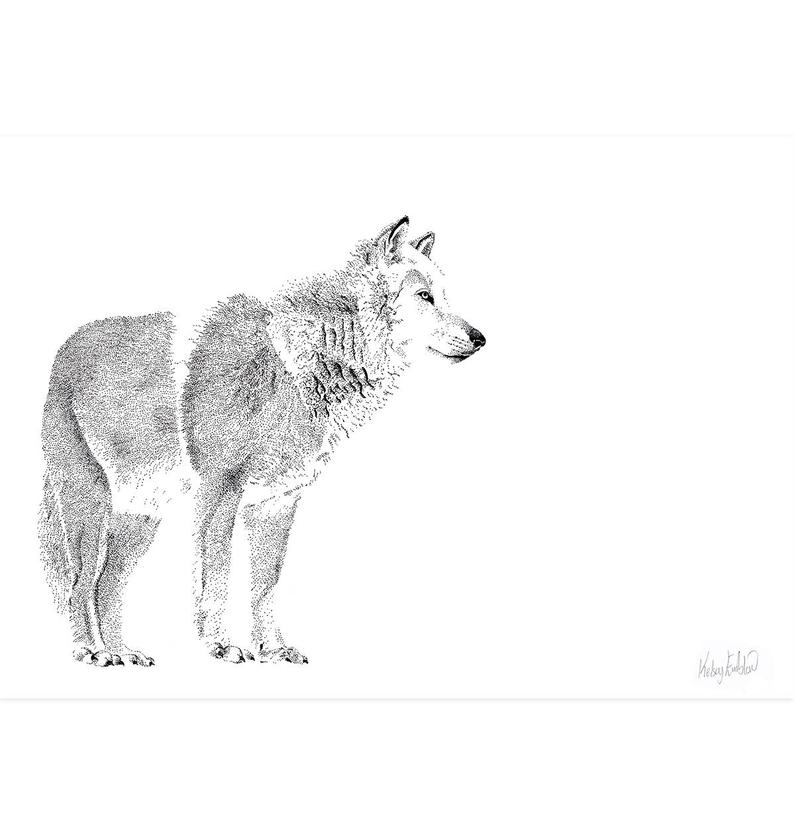 arctic wolf drawing gentle arctic wolf gt drawing art artwork nature paintings drawing wolf arctic