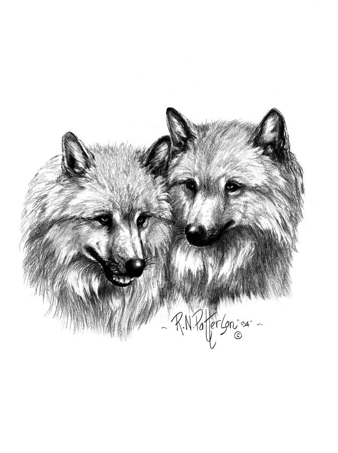 arctic wolf drawing learn how to draw an arctic wolf antarctic animals step arctic drawing wolf