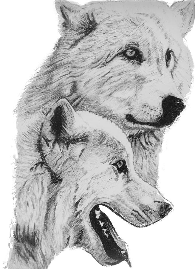 arctic wolf drawing slyly the arctic wolf by starlightsmarti on deviantart wolf arctic drawing