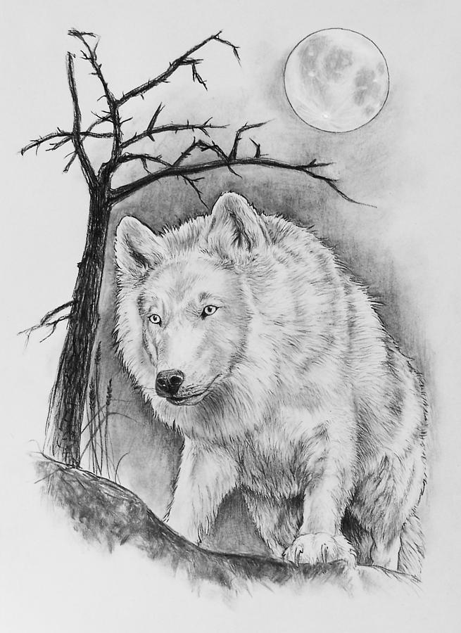 arctic wolf drawing tundra wolves drawing by bob patterson arctic drawing wolf